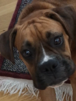 Chippewa Valley Boxers - Athena